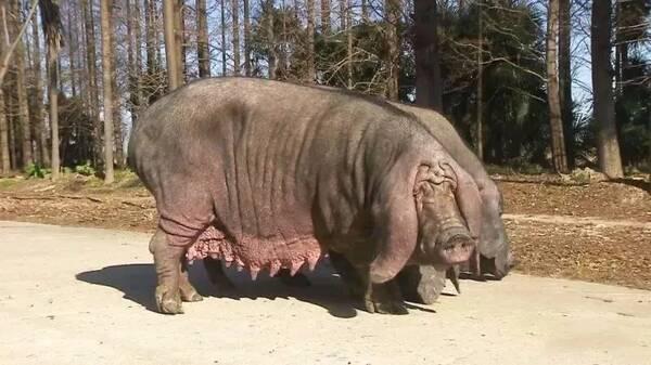 壁纸 犀牛 野生动物 600_337