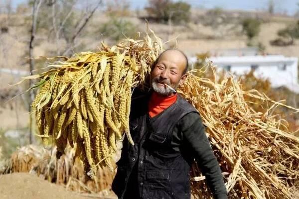 """农历秋分被设立为""""中国农民丰收节""""!"""