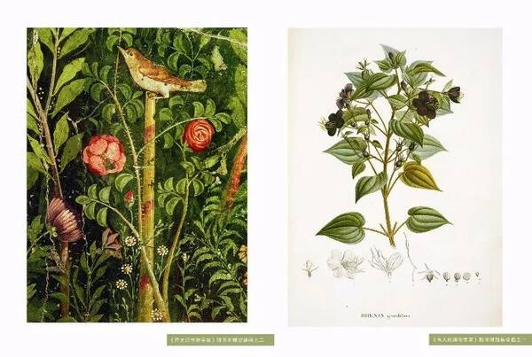 伦敦自然历史博物馆的奇幻之旅(6本好书推荐)