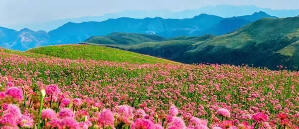 阳光倾泻满山,韭菜花迎风而动,整个人都醉倒在大自然广阔的胸怀中.