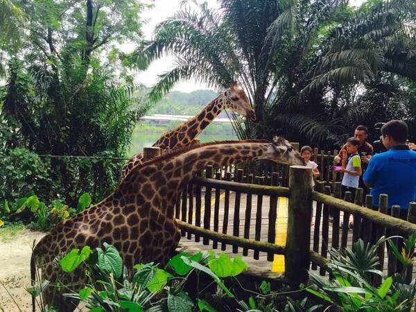 去年, 南郊动物园就开始升级改造, 新的南郊动物园( 济宁市儿童乐园)