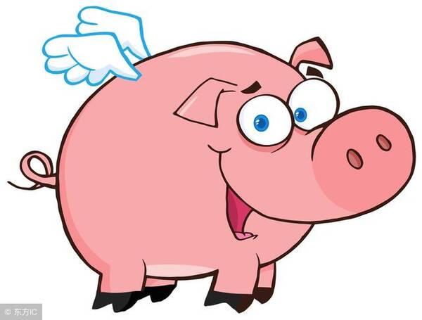 """莫欺少年穷,""""大金猪""""是最有可能逆袭!图片"""