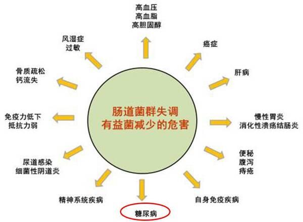 人体肠道结构图_与宿主始终处于动态平衡,因此,人体在正常情况下,肠道内菌群结构相对