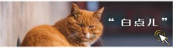 景仁宫中的大鳌拜估计是故宫里脾气最温顺的御猫了!