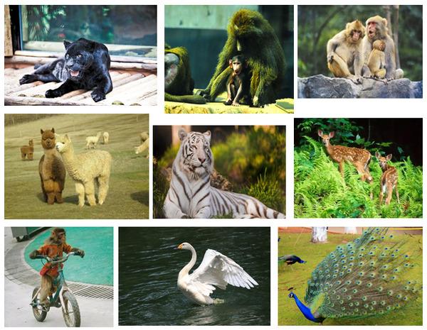临沂市宝山前野生动物园开园