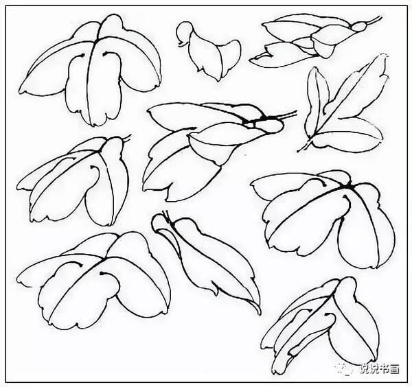 国画牡丹叶子和枝干的画法,简单易学!