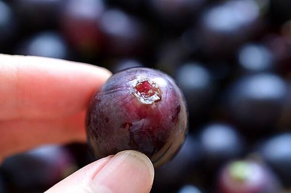 食材:葡萄 500g,冰糖 15g,冰块 3块 制作步骤 2,将葡萄用剪刀一颗颗
