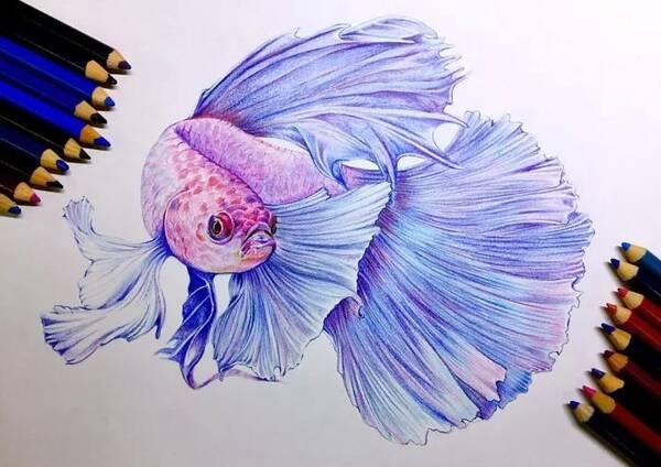 绘画教程 | 彩铅孔雀鱼,适合自学画画的你!
