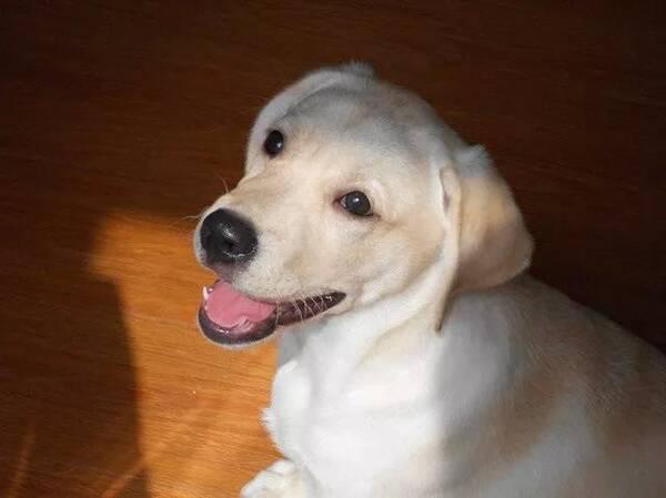 宠物每日小知识-狗狗为什么会哭?