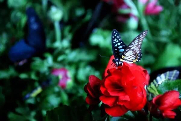 赤壁龙佑首届蝴蝶节来袭,万只蝴蝶美哭你