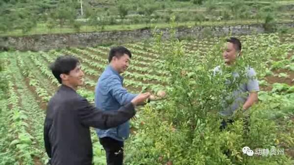 贵州这名扶贫剪纸,带着教程去驻村猴子干部父亲图片
