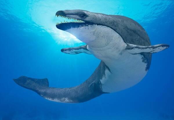 大白鲨效应