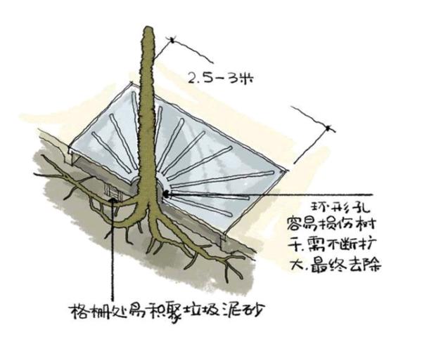 图3 树木地下结构示意图