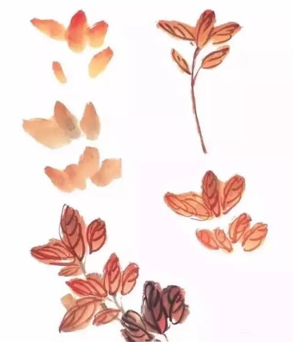 牡丹叶子画法 牡丹花叶的结构是三杈九顶,每一个分杈上生三片叶子,即