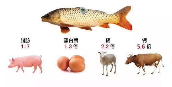 河南郑州特产优膳房生态黄河大鲤鱼,中秋商务送礼够有