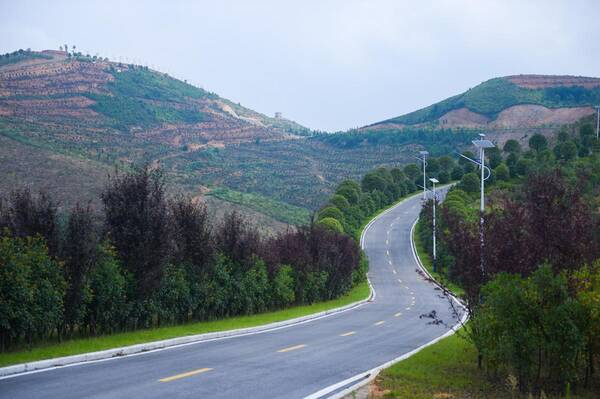 将于9月10日在茶陵县万樟园林现代农业产业示范园开幕.图片