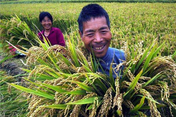 """首届""""中国农民丰收节"""",咸阳要这样庆祝"""