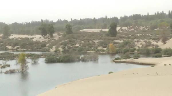 和田市大漠湖杨生态景区开工建设 总投资1.7亿占地面积约5000亩