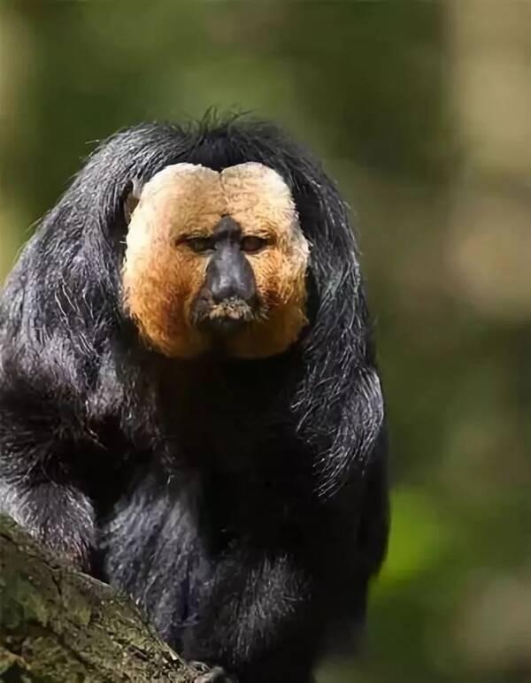 全球最罕见,最奇特的动物,你一定没见过!