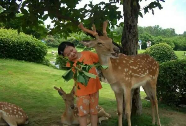 【驻马店 嵖岈山动物园】十一国庆节盛大开园!门票无限送!送!送!