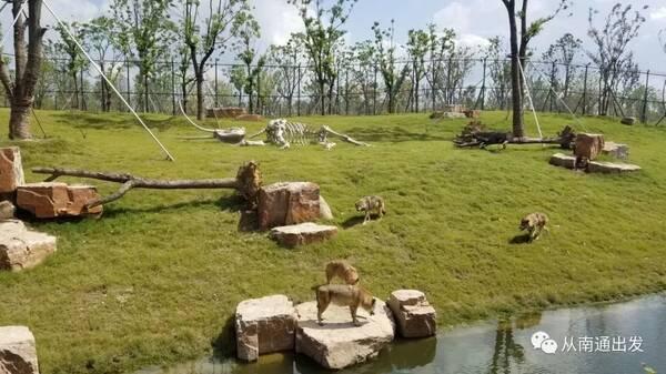 南通野生动物园国庆节到底值不值得去?看完自有评判!