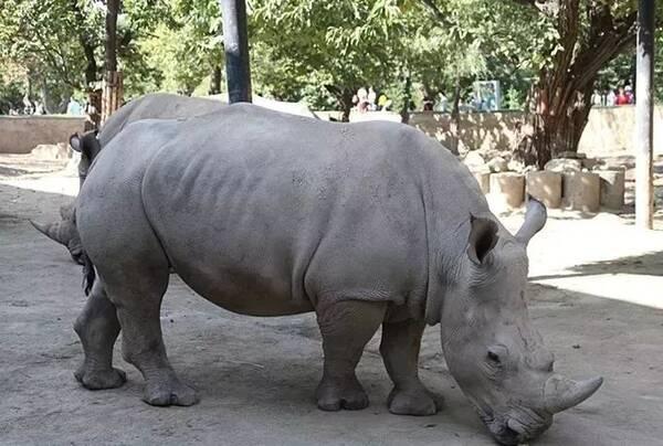 西安秦岭野生动物园是野生动物保护科普教育基地,国家4a级景区,集