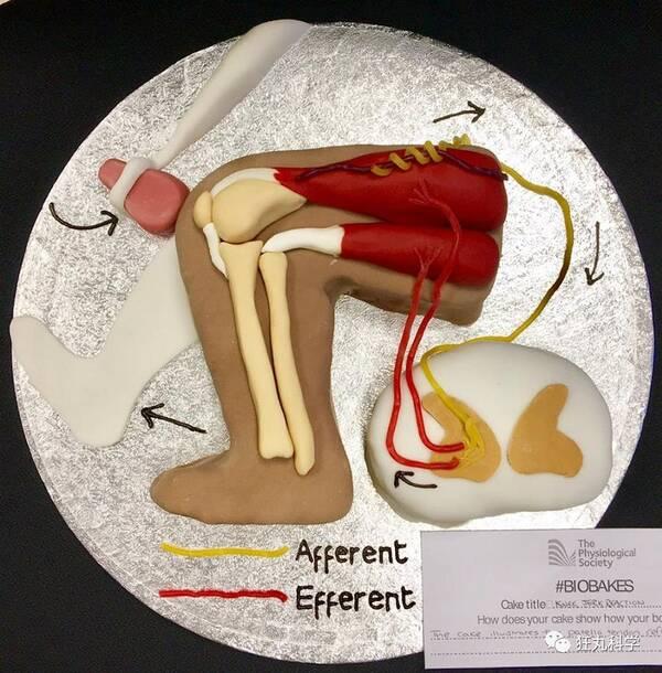 人体刺身价格_你的脑子被人做成蛋糕了!大腰子和人体刺身想尝尝吗?