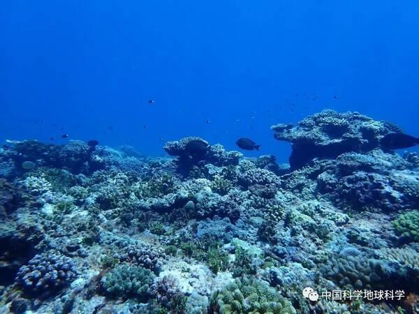 从分布区域来看,我国南海珊瑚礁可大体分为南沙群岛,西沙群岛,中沙