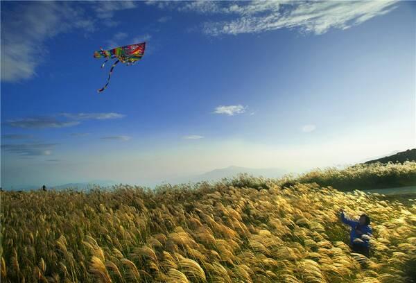 """花开正当时!温州这些""""网红花海"""",有你想要的诗和远方!"""
