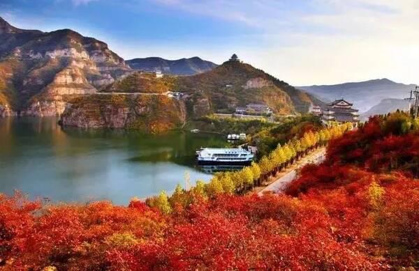 """游览""""皇家山水""""黄河三峡 乘坐桃花岛缆车 俯瞰层林尽染,奇峰叠峦 登桃"""