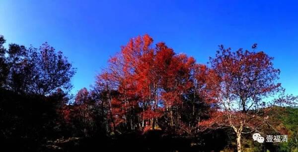 福清的这个地方秋天的风景美到让人窒息!你去过吗?