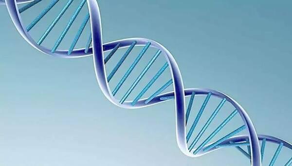 生命种子——干细胞