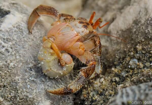 壁纸 动物 甲壳类 昆虫 桌面 600_414