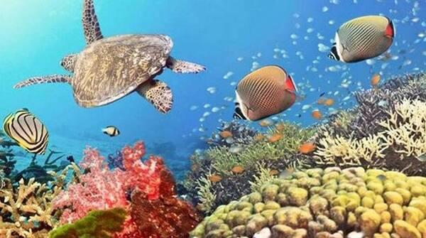 在我国,珊瑚礁主要分布在南沙群岛海区,它们分布于大海之中的170多座