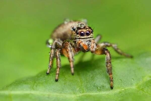 疯狂的微观昆虫摄影,看得你毛骨悚然