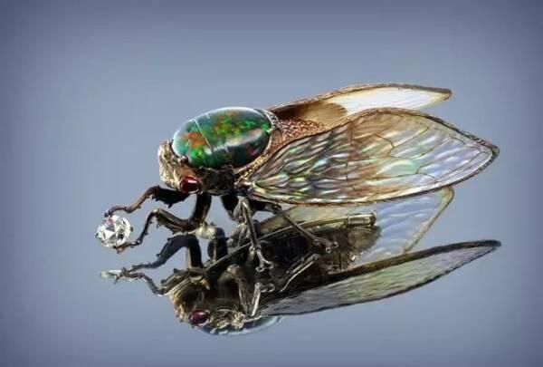 蝉声耳根响 蝇翅目中晕图片