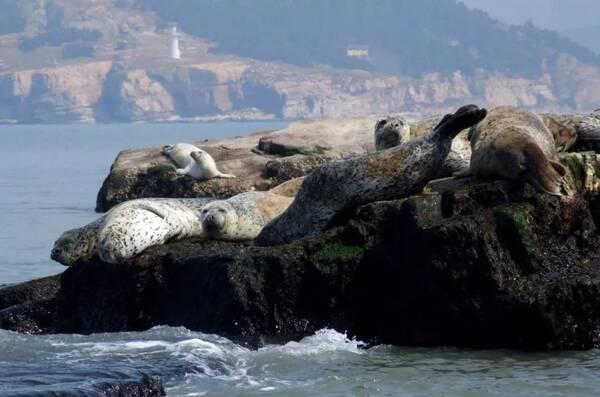 仙境海岸·鲜美烟台丨这10封长岛情书,送给不一样的你