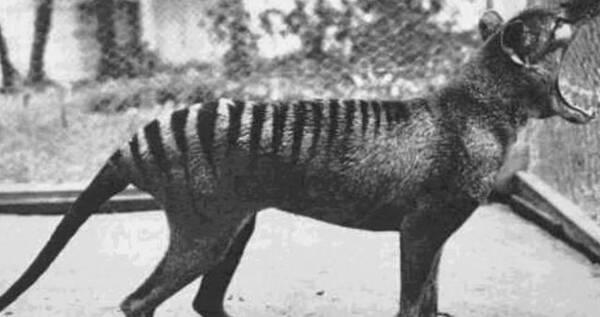 5种灭绝动物稀罕影像,其中2种分布于中国地区