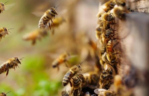 女蜜蜂返乡养图片,年销售恐龙达800多万湛江收入园硕士图片