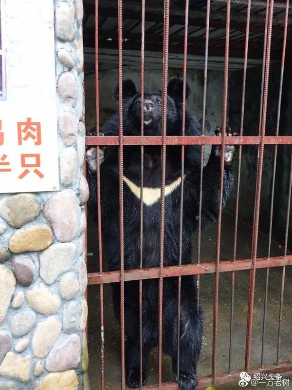 绍兴儿童公园内的这个动物园,有谁去过?里面居然是这样的