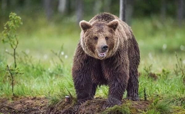 我们人类不仅深受环境的影响,也面临其他野生动物的威胁.