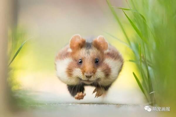 锡耶纳国际摄影大赛获奖作品中的动物主题照,很震撼