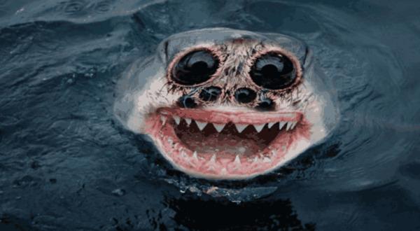 世界上长得最可怕的动物, 被人视为邪恶的化身, 你见过吗?