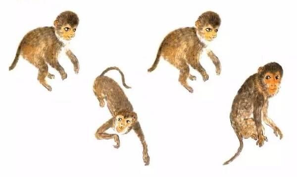 6,用朱墨画尾巴及手 二,猴子动态: 猴子属灵长类动物,活动在森林中,过