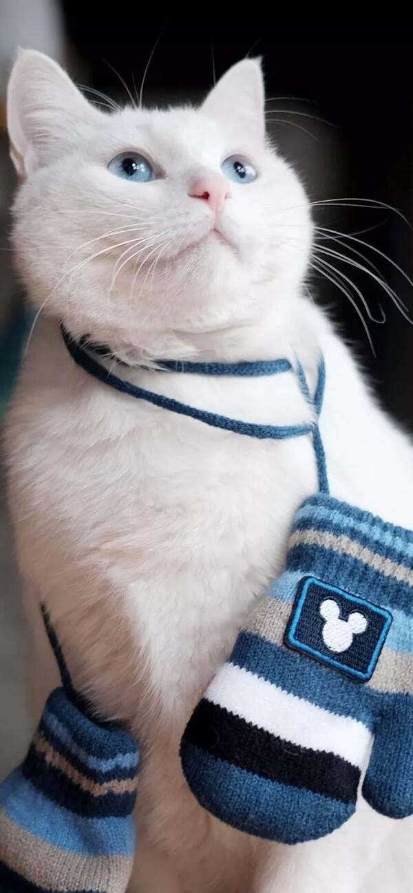 壁纸 动物 狗 狗狗 猫 猫咪 小猫 桌面 600_1298 竖版 竖屏 手机