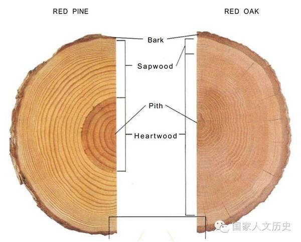 bruce hoadley,《了解木材:木工手册》(understanding wood:a图片