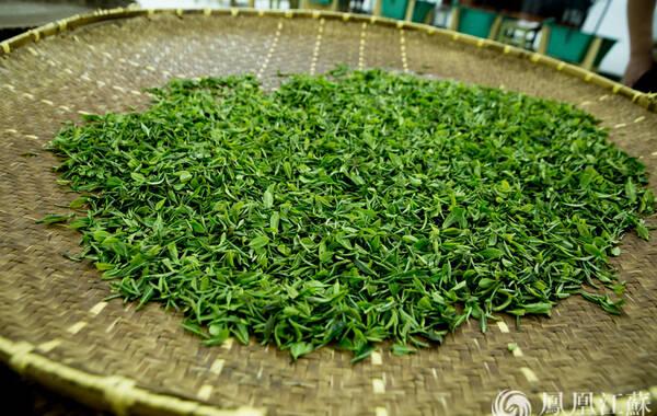 """采摘好的雨花茶鲜叶:""""采摘""""对炒制好茶非常重要,鲜嫩匀度要求高,采摘的茶叶为一芽一叶或一芽二叶初展,茶叶长度为2-3厘米。采摘时的方法是提手采摘,即掌心向下,用拇指和食指夹住鲜叶上的嫩茎,向上轻提,芽叶折落掌心,投入茶篮中。不得捋采、抓采,也不得带老叶杂物。要求芽叶成朵,不能采碎,不带蒂头。"""