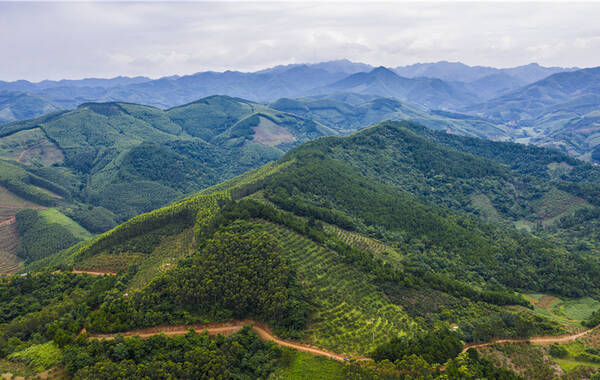 """在广西右江盆地腹地,有一个县每年能为全国13多亿人每人提供一个芒果,它就是""""芒果之乡""""——广西壮族自治区百色市田东县。"""