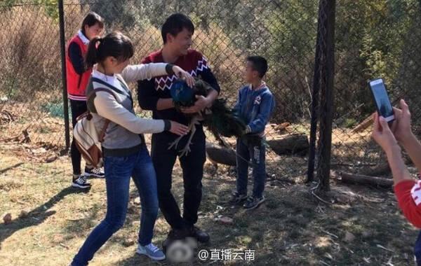 据云南信息报报道,近日,一名网友在昆明郊区的云南野生动物园拍到一些游客强行抱着孔雀照相,甚至还有拔孔雀的羽毛这些不文明的行为。
