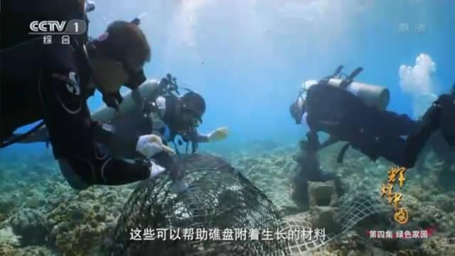 """恢复海底""""雨林""""!中国科学家在三沙海底种珊瑚"""